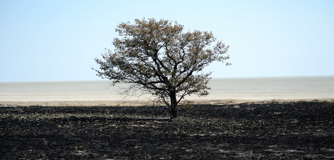Conservatives: Burnt and dead tree